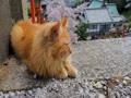 西国寺の猫