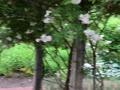 イコロの森 ホワイトガーデン