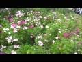 昭和記念公園2017年10月8日秋の初め.wmv